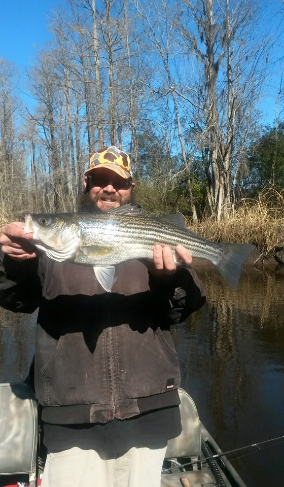 Cape Fear River Striper Fishing